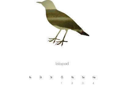 kalendář 2018 ptáci